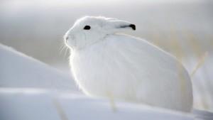 winterwende qigong